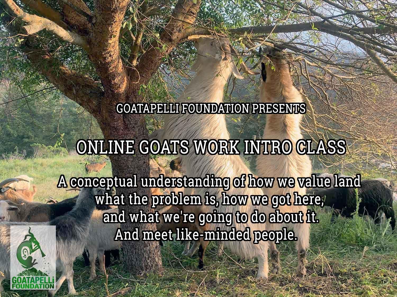 Goats Work Introductory Class Goatapelli Foundation